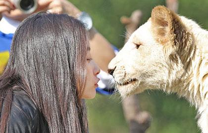 倪妮大胆与白狮亲昵